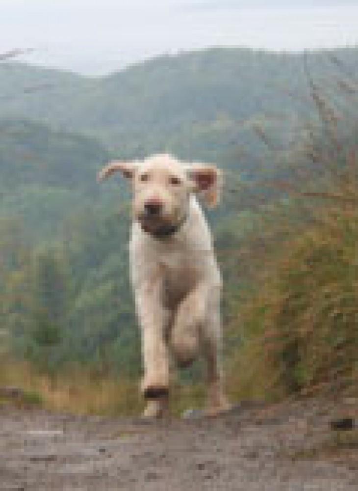 Bennachie dog walk near Inverurie, Scotland - Dog walks in Scotland
