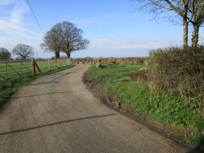 A281 dog walk and dog-friendly pub, West Sussex - Driving with Dogs