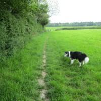 A377 Dog walk with dog-friendly inn, Devon - Devon dog walk and dog-friendly pub.JPG