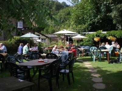 A39 Woodland dog walk and scrumptious cream tea, Somerset - Driving with Dogs
