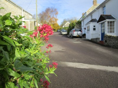 A354 Dorset ridgeway dog walk and dog-friendly pub, Dorset - Driving with Dogs