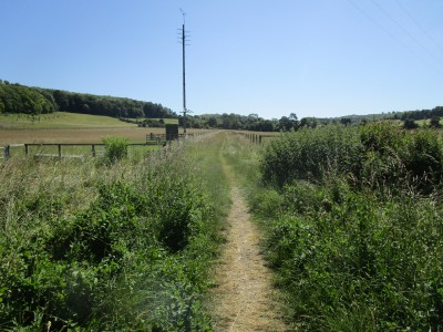 M40 Chilterns dog walk and dog-friendly pub, Oxfordshire - Driving with Dogs