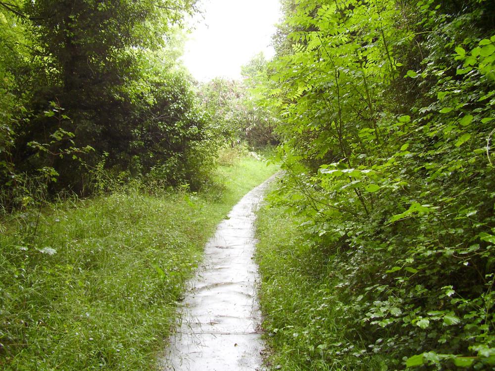 Shawford Down dog walk, Hampshire - Dog walks in Hampshire