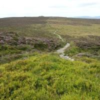 Simonside Hills dog walk, Northumberland - 20130806_142431.jpg