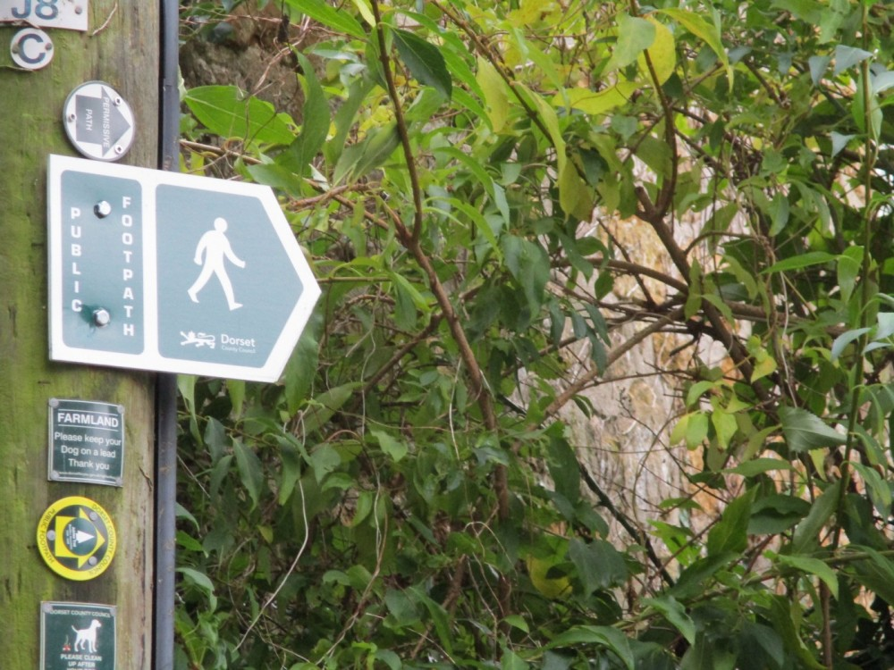 A3066 dog-friendly dining and dog walk, Dorset - IMG_0580.JPG