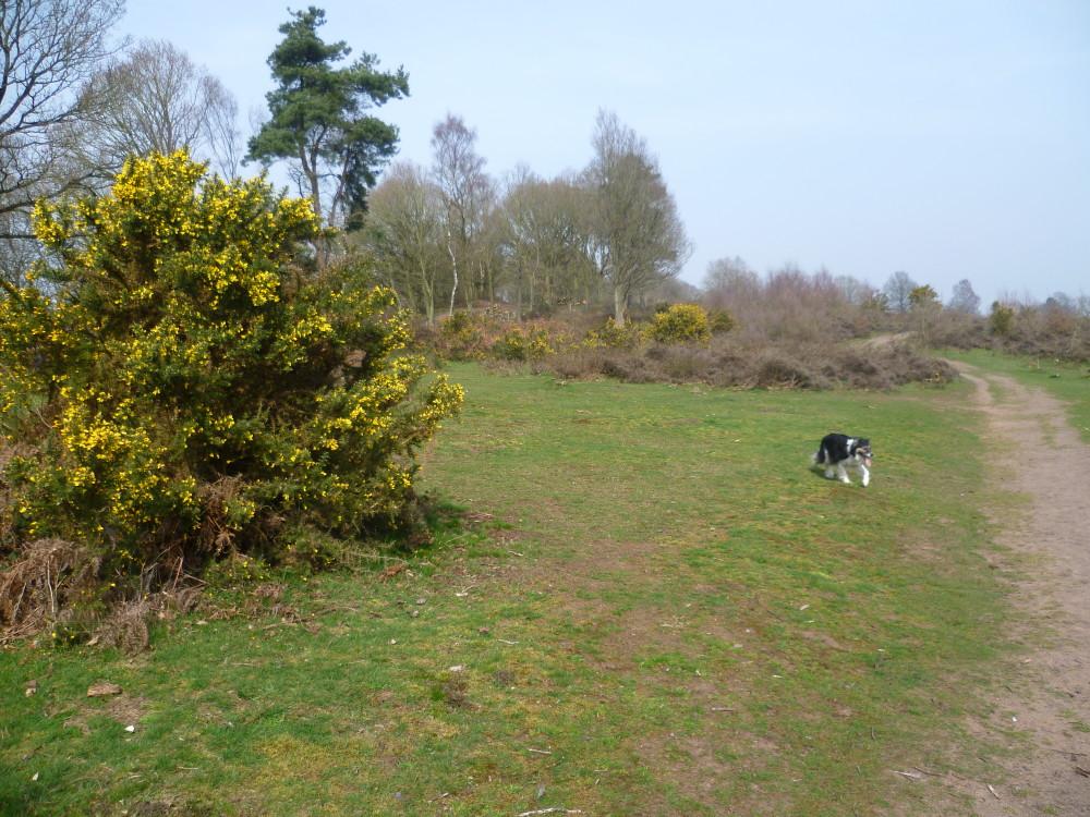 A449 heritage dog walk, Staffordshire - Dog walks in Staffordshire