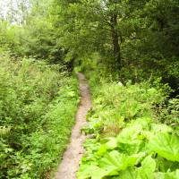 Itchen Way dog walk near Eastleigh, Hampshire - Dog walks in Hampshire