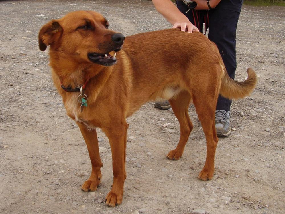 A3M Junction 5 Broadmarsh dog walk, Hampshire - Dog walks in Hampshire