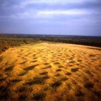 A138 Neolithic dog walk, Norfolk - Dog walks in Norfolk