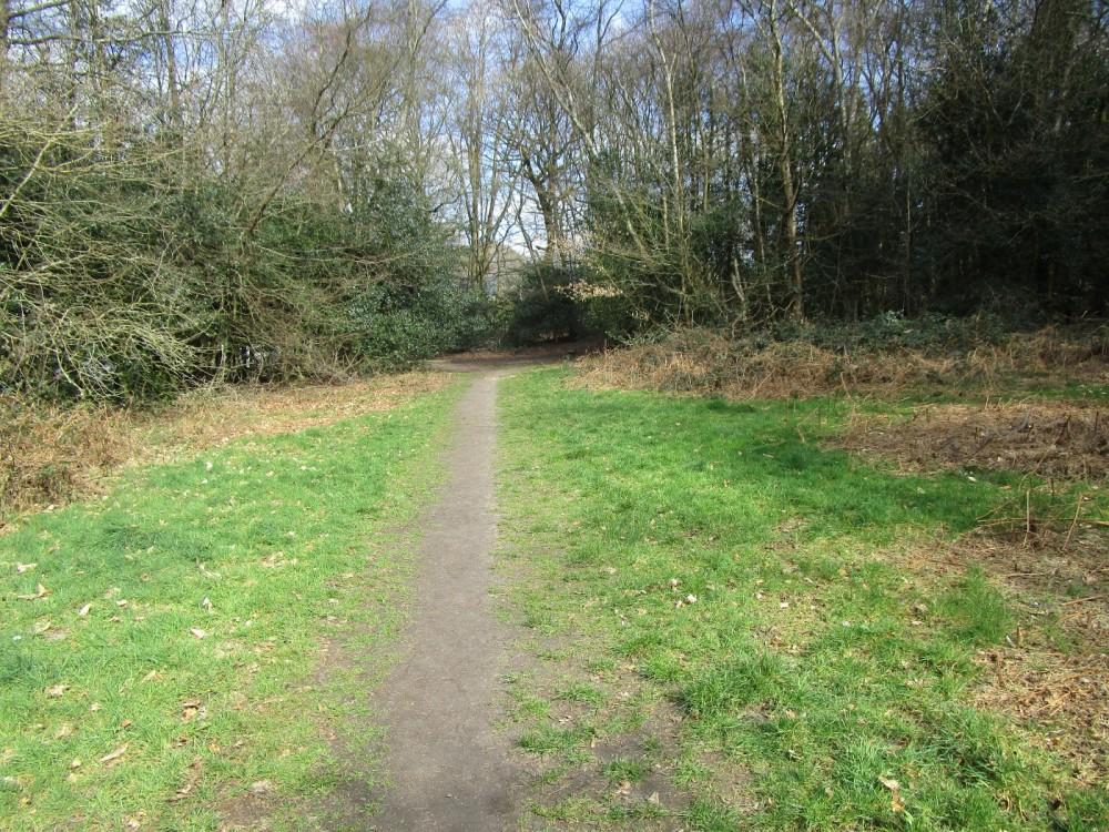 Woodland dog walk near Liss, West Sussex - Sussex dog-friendly pub and dog walk.JPG