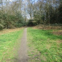 Woodland dog walk near Liss, West Sussex - Sussex dog-friendly pub and dog walk.JPG