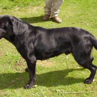 M5 Junction 11A dog walk near Cheltenham, Gloucestershire - Dog walks in Gloucestershire