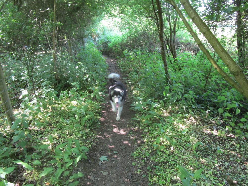 Dog-friendly pub and dog walk near Charlbury, Oxfordshire - Dog walks in Oxfordshire