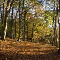 Sulham Hill dog walk, Berkshire - Berkshire dog walk