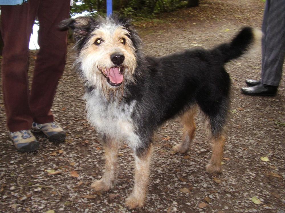 M6 Junction 40 Ullswater walk and dog-friendly pub, Cumbria - Dog walks in Cumbria