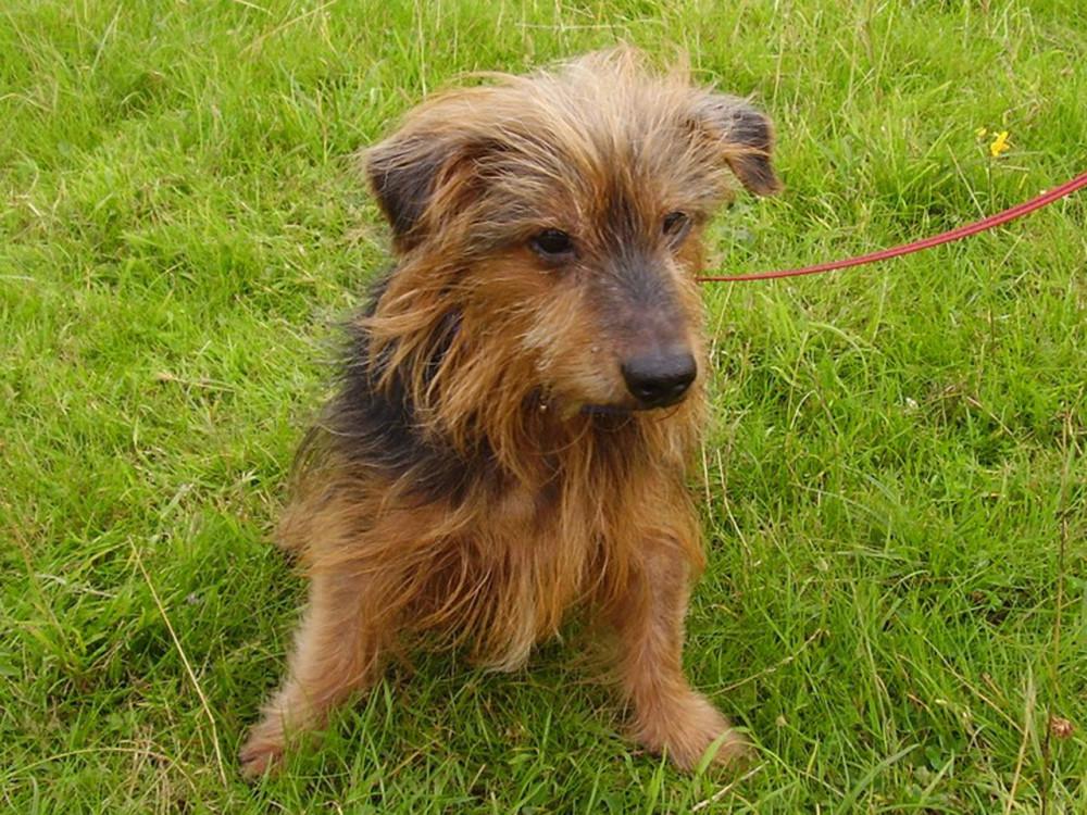Dumsey Meadow local dog walk, Surrey - Dog walks in Surrey