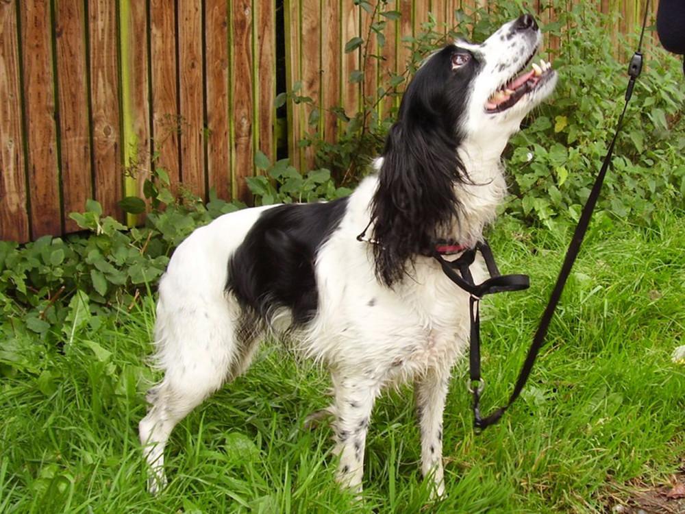 M61 Junction 8 dog walk Cuerden Valley Park, Lancashire - Dog walks in Lancashire
