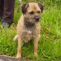 M65 Junction 3 dog walk and dog-friendly pub, Lancashire - Dog walks in Lancashire