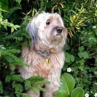 M25 Junction 26 Forest dog walk and dog-friendly pub, Essex - Dog walks in Essex