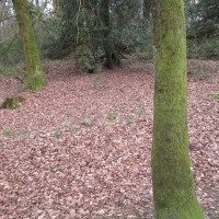 A245 Woking dog walk on the Common, Surrey - Surrey dog walks.JPG