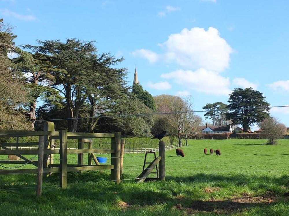 A607 dog-friendly pub and dog walk near Leicester, Leicestershire - Dog walk near the A607 Leicester.jpg