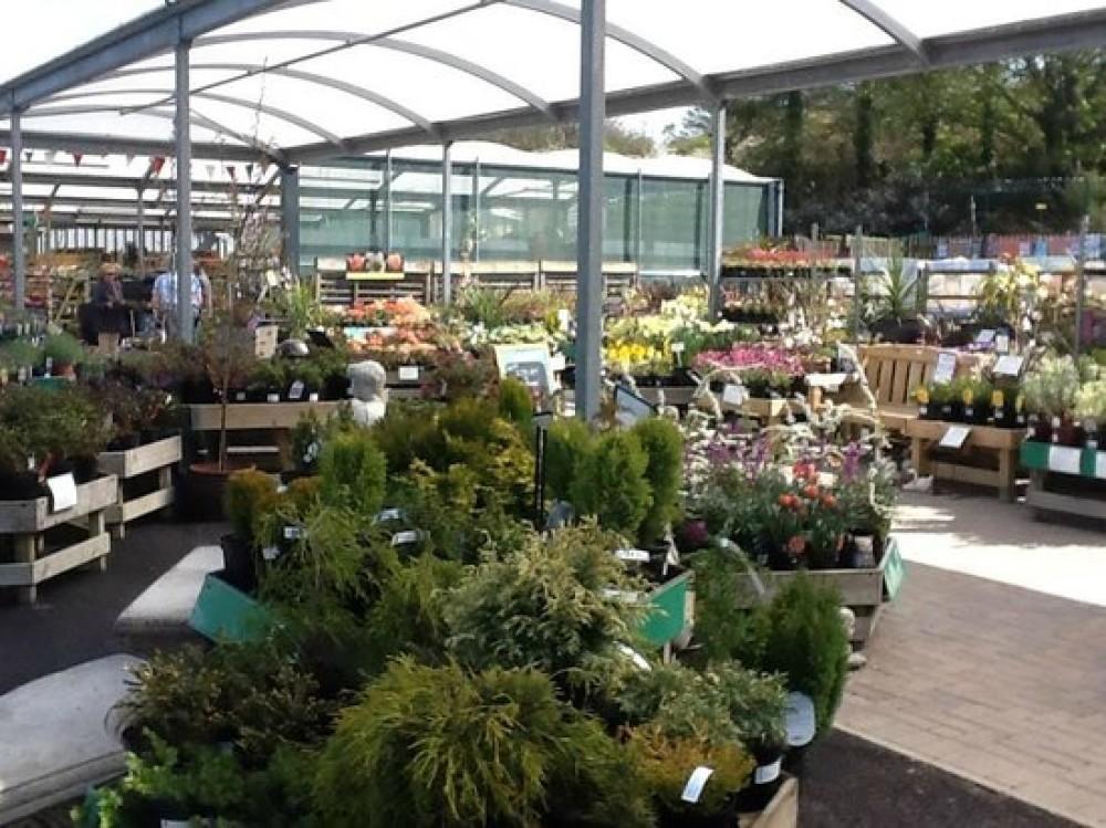 Fron Goch Garden Centre - dog-friendly, Wales - C3A31C4C-1FD9-44B5-96FA-5B3C5E25BB65.jpeg