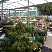 Fron Goch Garden Centre - dog-friendly, Wales - C3A31C4C-1FD9-44B5-96FA-5B3C5E25BB65.jpeg