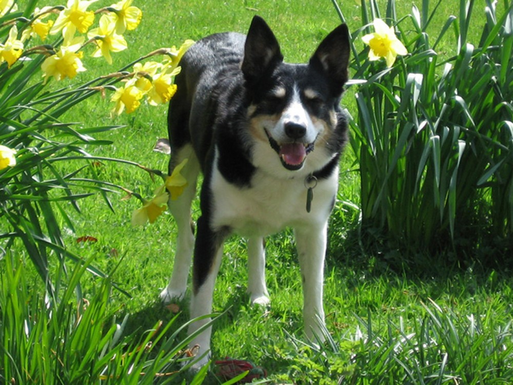 Kingmoor Sidings Nature Reserve dog walk, Cumbria, Cumbria - Dog walks in Cumbria