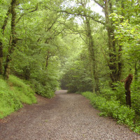 Little Wenlock dog walk, Shropshire - Dog walks in Shropshire