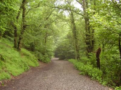 Wrekin dog walk, Shropshire - Driving with Dogs