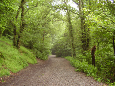Little Wenlock dog walk, Shropshire - Driving with Dogs