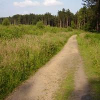 Harlow Wood dog walk, Nottinghamshire - Dog walks in Nottinghamshire