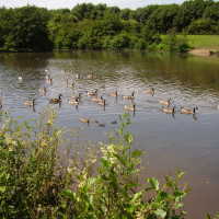 Lakes dog walk in historic park, Nottinghamshire
