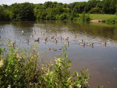 Mill Lakes dog walk, Bestwood, Nottinghamshire - Driving with Dogs