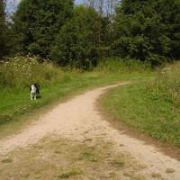 Mill Lakes dog walk, Bestwood, Nottinghamshire - Dog walks in Nottinghamshire