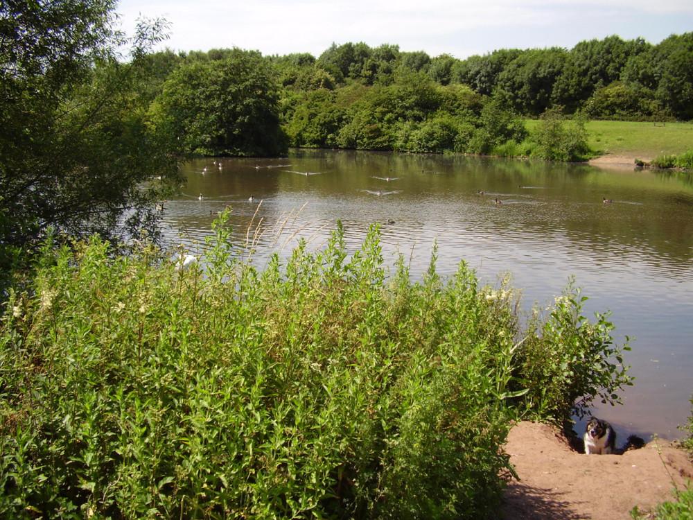 Lakes dog walk in historic park, Nottinghamshire - Dog walks in Nottinghamshire