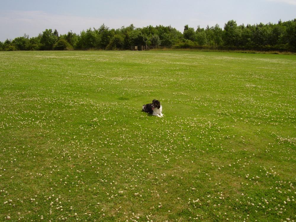 Heanor dog walks near Eastwood, Derbyshire - Dog walks in Derbyshire