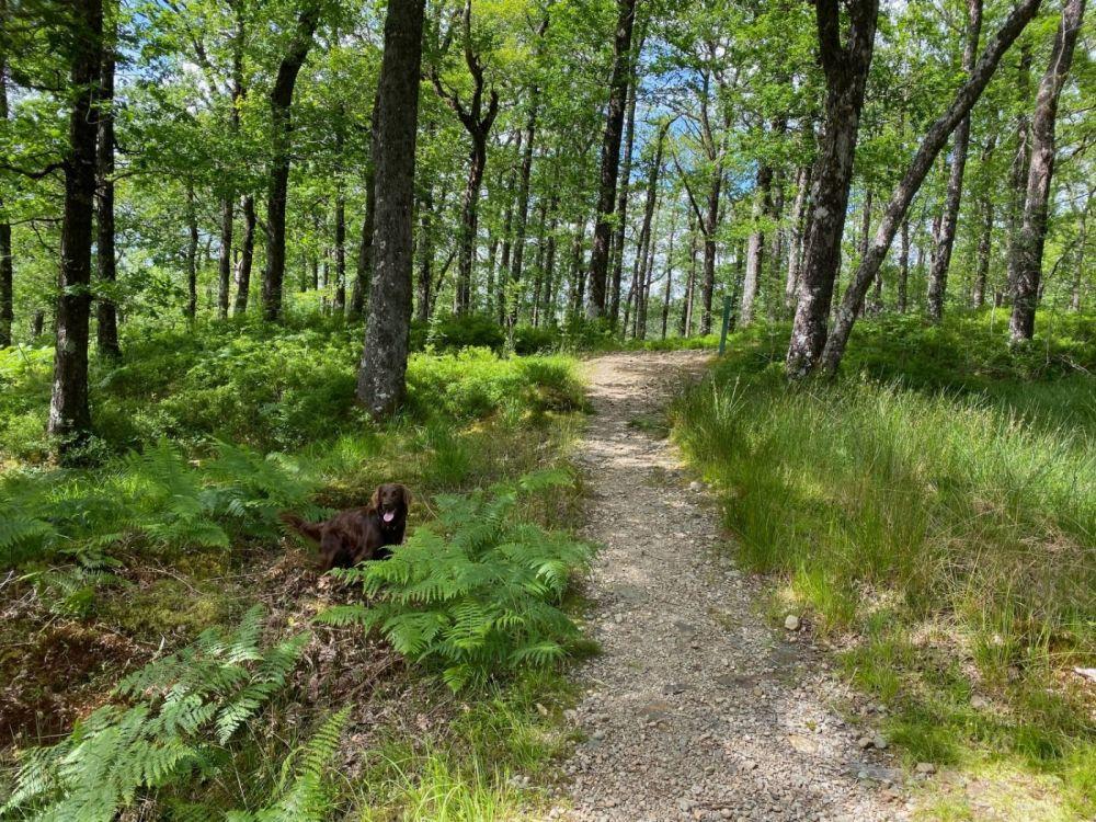 A85 dog walk near Dalmally, Scotland - Dog walk off the A85.jpg
