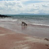 Applecross dog-friendly beach, Scotland - Dog walks in Scotland