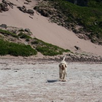 Applecross dog-friendly beach, Scotland - Dog walks in Scotland