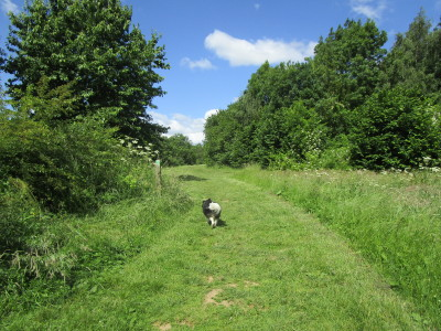 Roman meadow dog walk, Leicestershire - Driving with Dogs