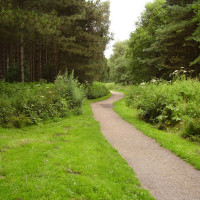 A60 Woodland dog walks, near Kirkby, Nottinghamshire