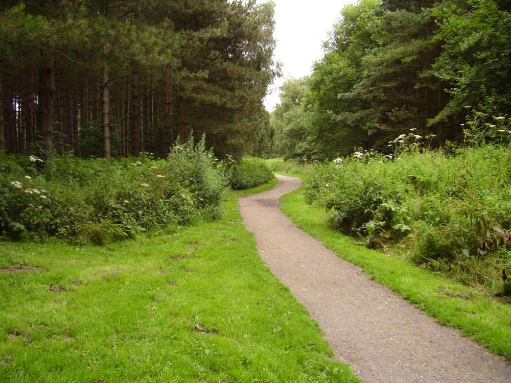 Thieves Wood dog walks, near Kirkby, Nottinghamshire - Dog walks in Nottinghamshire