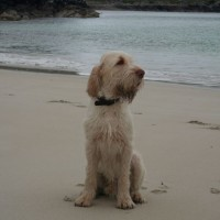 Bostadh dog-friendly beach on the Isle of Lewis, Scotland - Dog walks in Scotland