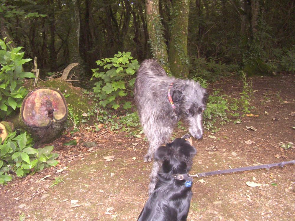 Peaceful woodland dog walk off the A30, Cornwall - Dog walks in Cornwall