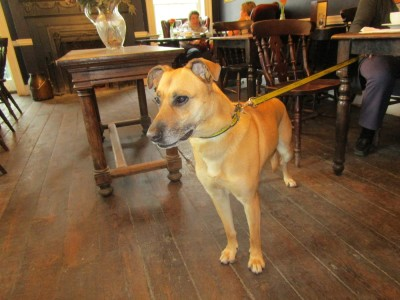 A27 South Downs dog walk and dog-friendly pub, East Sussex - Driving with Dogs