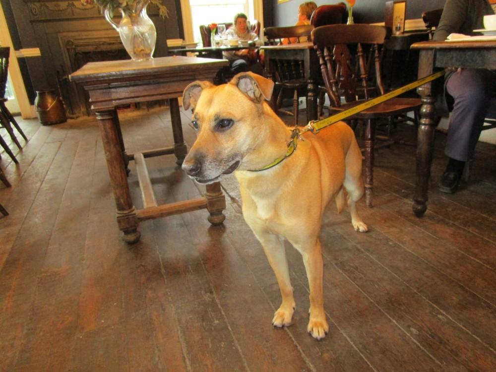 A27 South Downs dog walk and dog-friendly pub, East Sussex - Dog walks from dog-friendly pubs in Sussex.JPG