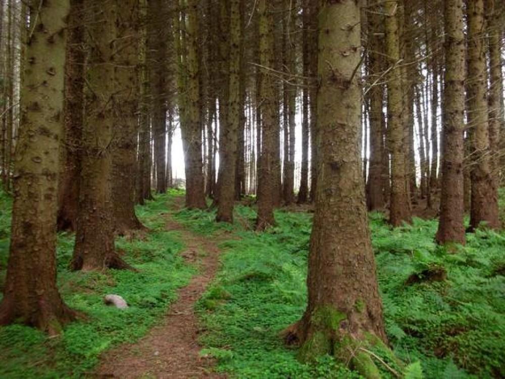 Dog walk in a Donegal glen, RoI - Dog walks in Ireland