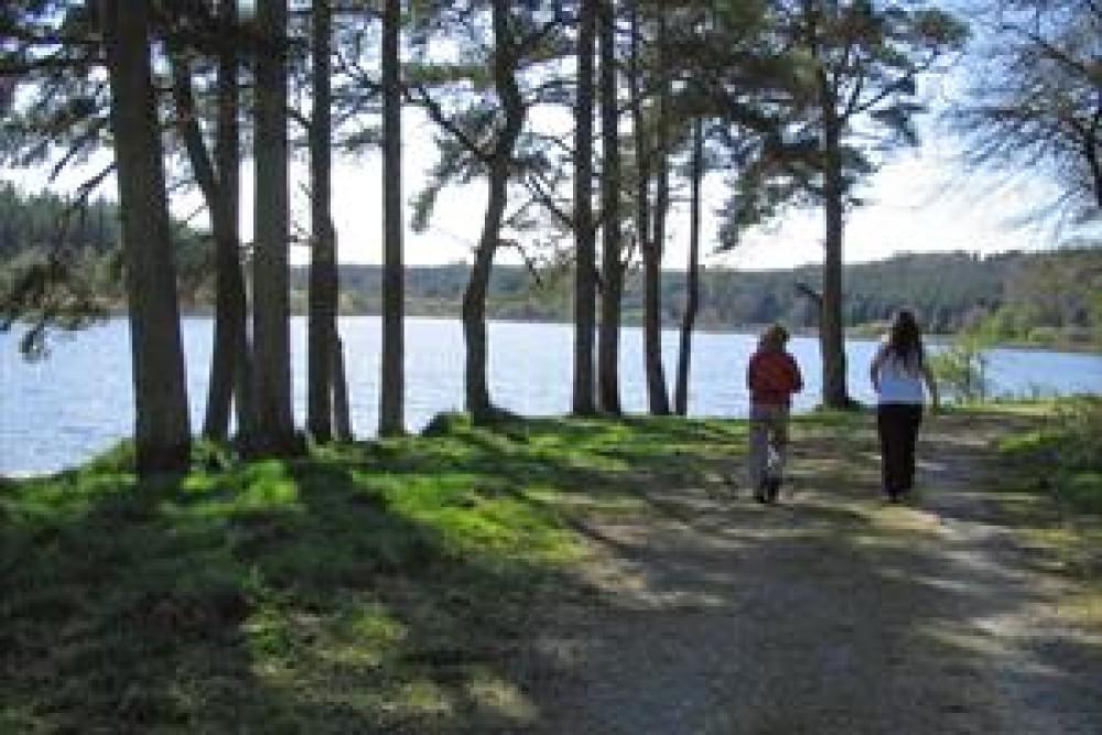 Lakeside dog walk near Bailieborough, RoI - Dog walks in Ireland