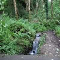 Forest dog walk near Kingscourt, RoI - Dog walks in Ireland